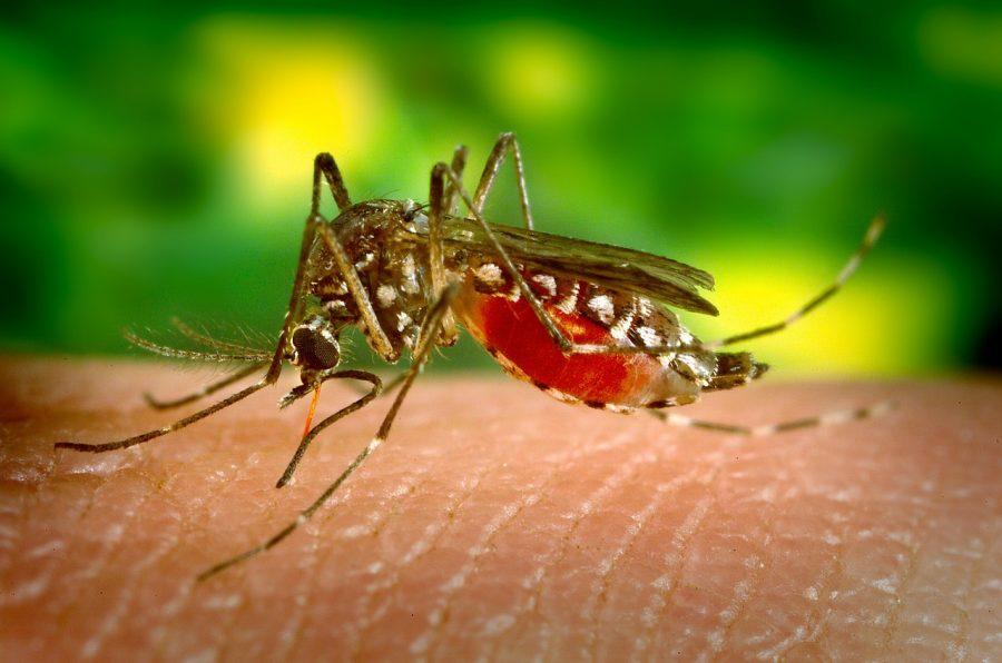 Mosquito-borne+diseases+has+threaten+World
