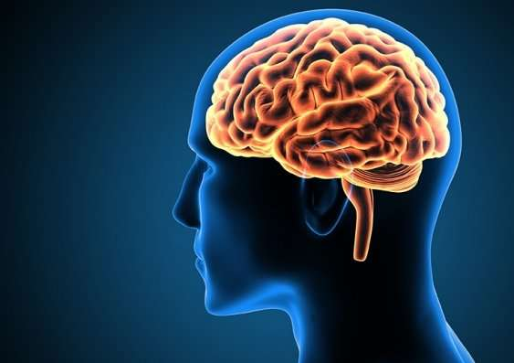 The cause of bullying can come from many different places, including the brain.